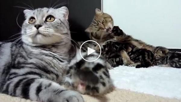 Кошачий позитив длиной в 20 минут