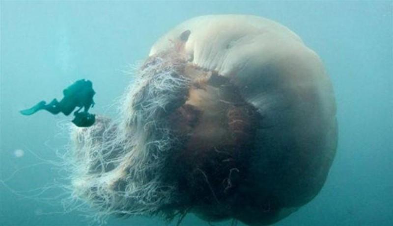 Снимки, после просмотра которых ты в воду ни ногой (14фото)