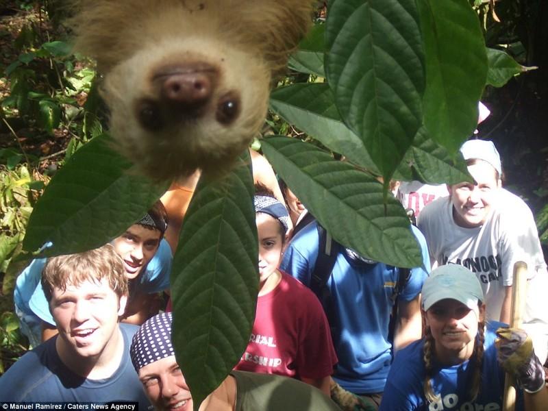 Забавнейшие фотографии животных, которые неожиданно вклинились в селфи (20фото)
