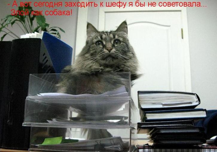 Офисные кошки (24фото)