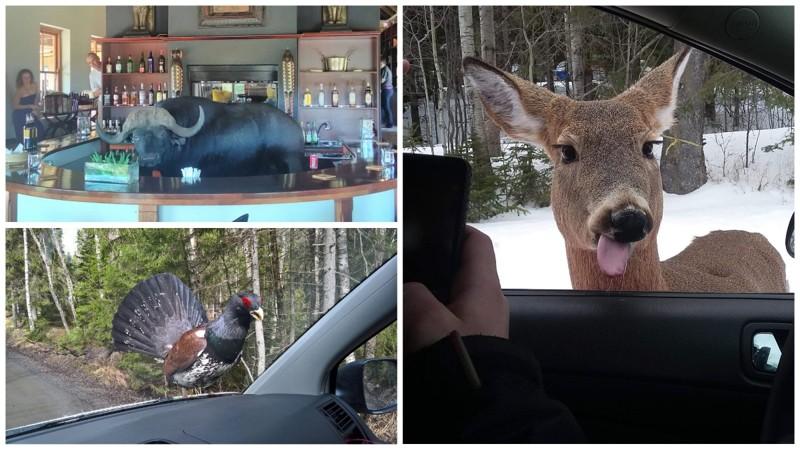 Иногда встречи с животными бывают очень неожиданными (21фото)