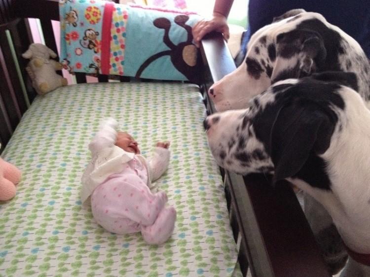 Родители оставили младенца с собакой (17фото)