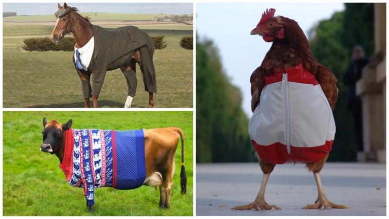 Конь в пальто и другие животные-модники (21фото)