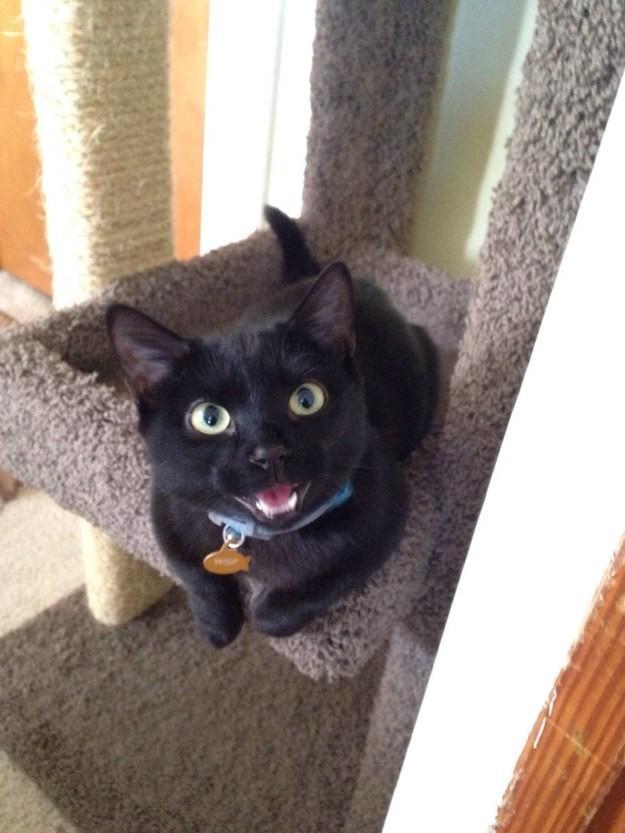 Жил да был черный кот (26фото)