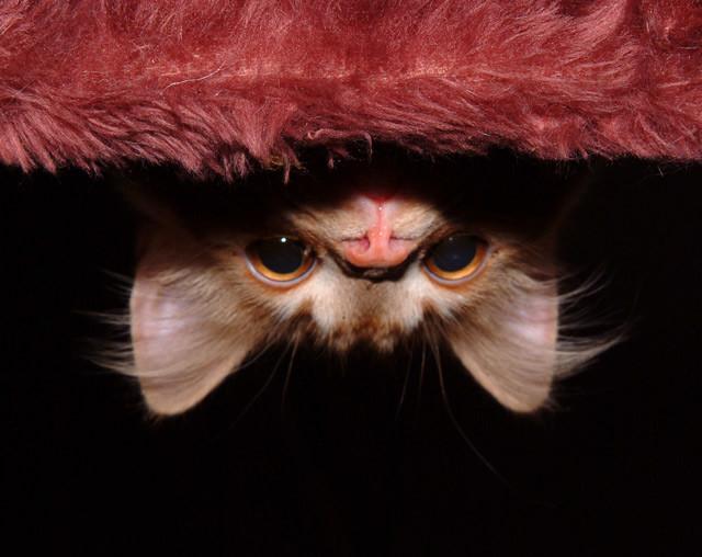 20 мест, куда может спрятаться ваш кот (20фото)