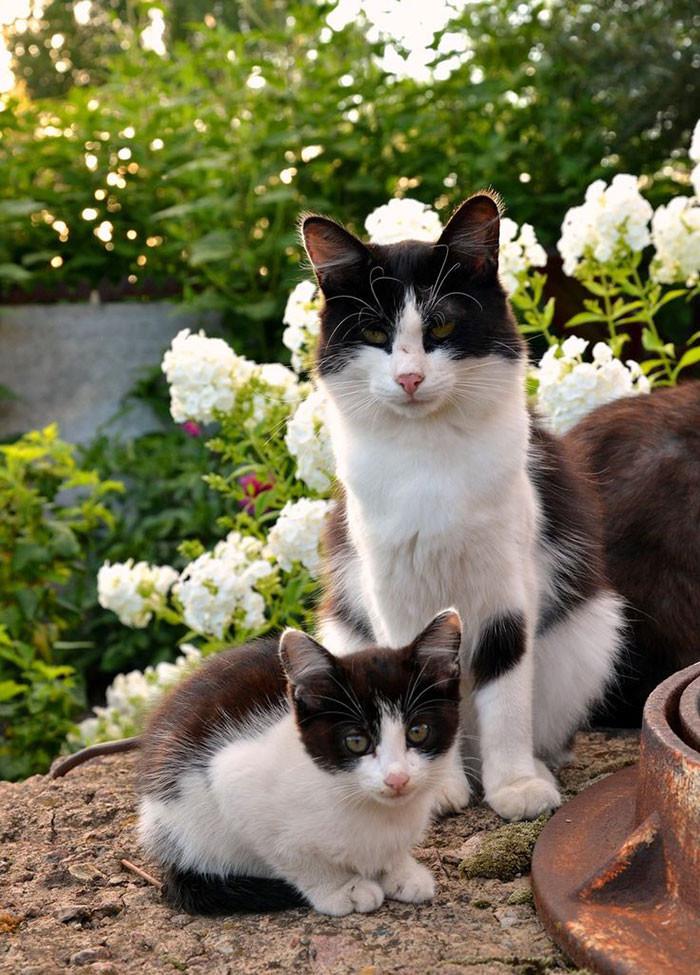 Кошки и котята: они, как две капли, похожи друг на друга! (20фото)