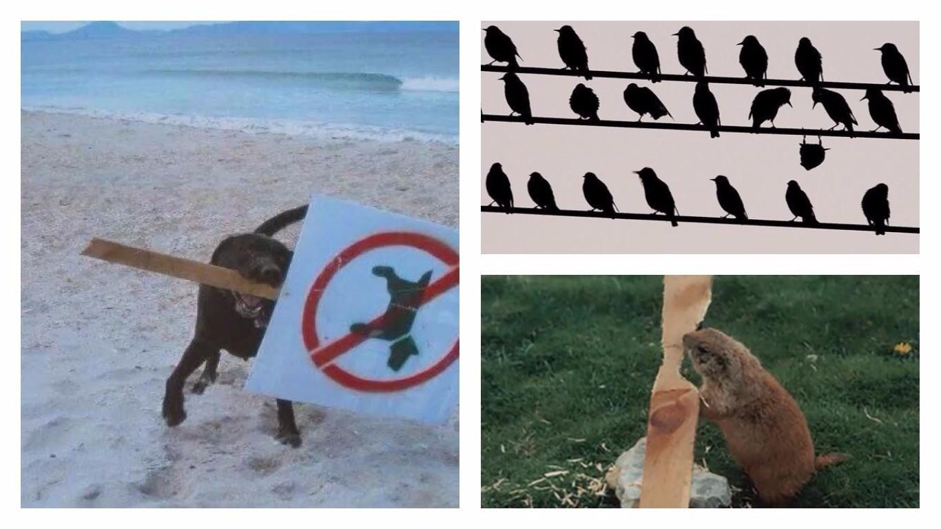 25 неугомонных животных, которым плевать на ваши дурацкие правила (18фото+8гиф)