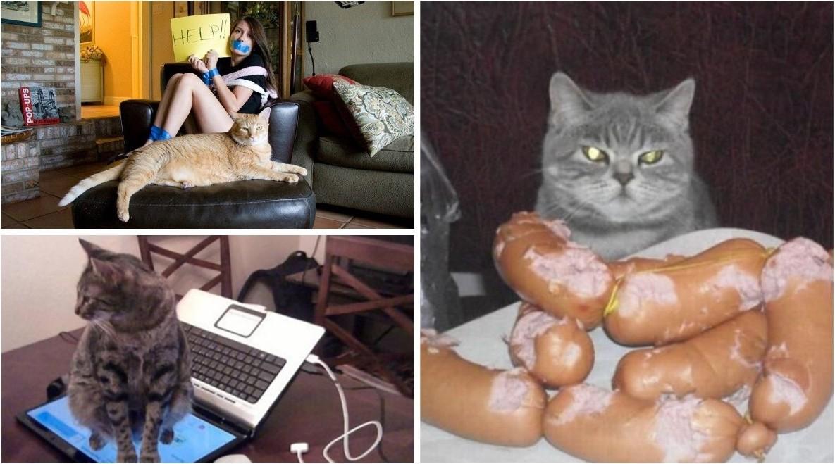 Когда кот в доме хозяин (21фото)