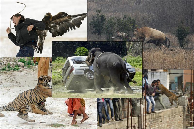 13 вызывающих эмоции фото животных,