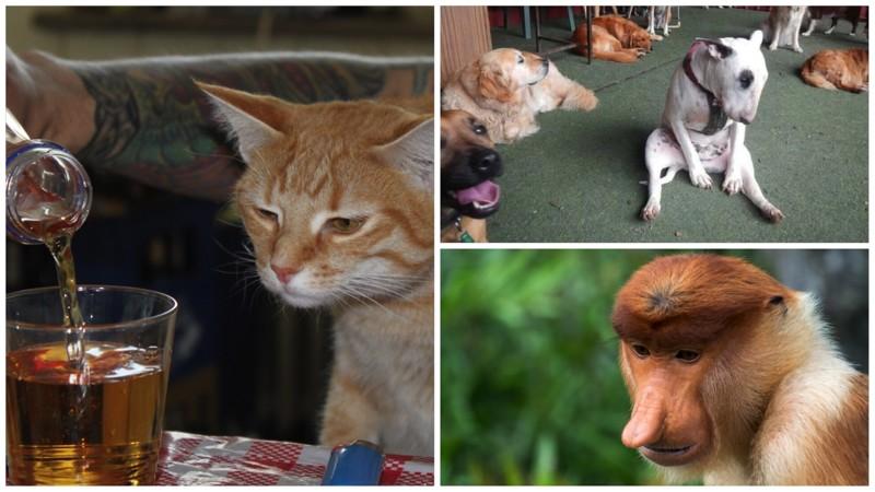 20 животных, которые тоже ненавидят понедельники (21фото)