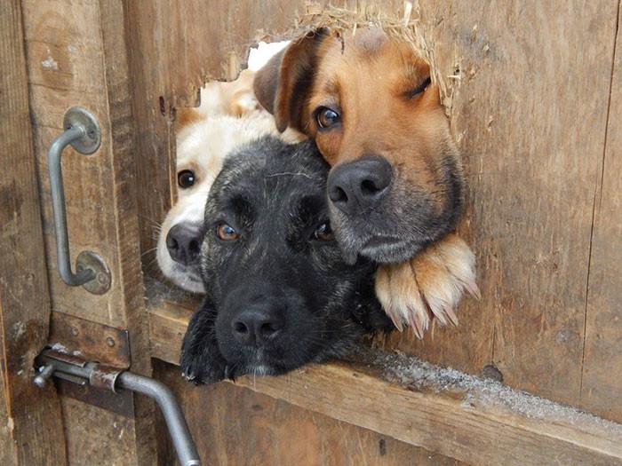 40 отчаянных собак, желающих поздороваться (51фото)