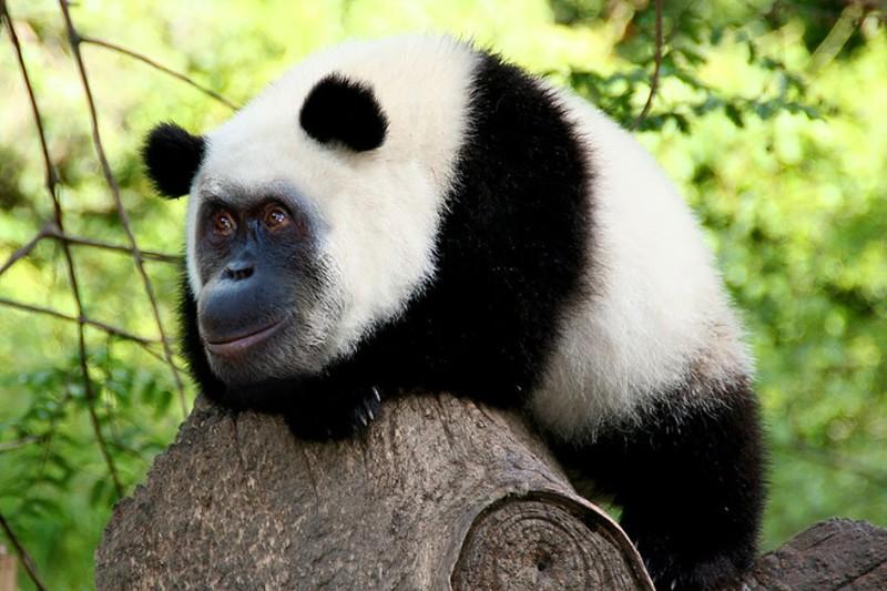 15 безумных и забавных гибридов животных, созданных в фотошопе (15фото)