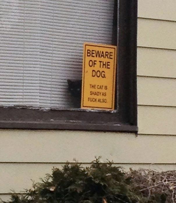 'Свирепые' псы, прячущиеся за табличками 'Осторожно, злая собака!' (14 фото)