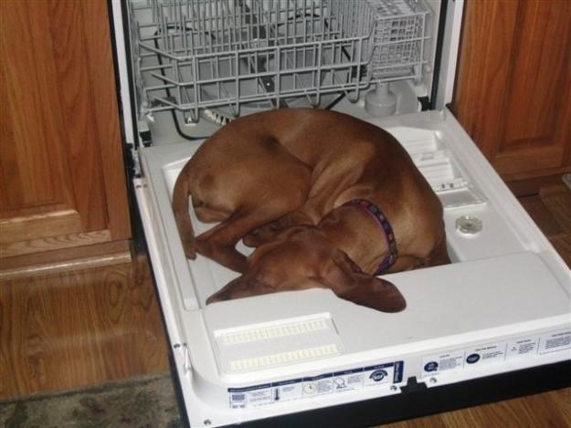21 собака, которая спит, где ей вздумается, и ей наплевать на ваше мнение (21фото)