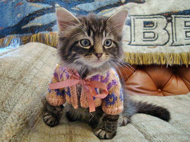 30 маленьких животных в миниатюрных свитерах, от вида которых вы расплыветесь в улыбке (31фото)