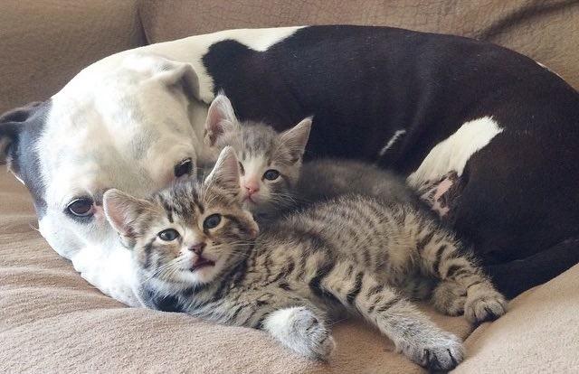 Живут как кошка с собакой (18фото)