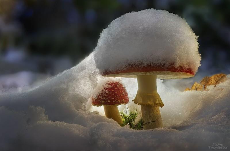 Грибы, грибки, грибочки (23фото)