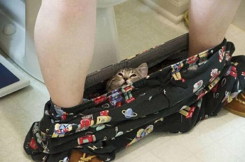 Найди кота (38фото)