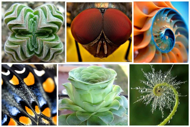 Жизнь вблизи - красота и геометрия природы (24фото)