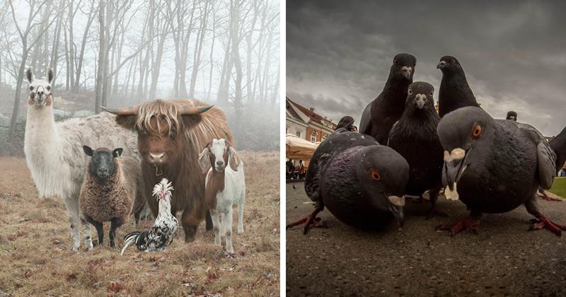 Эти звериные компании точь-в-точь похожи на рок-группы! (41фото)