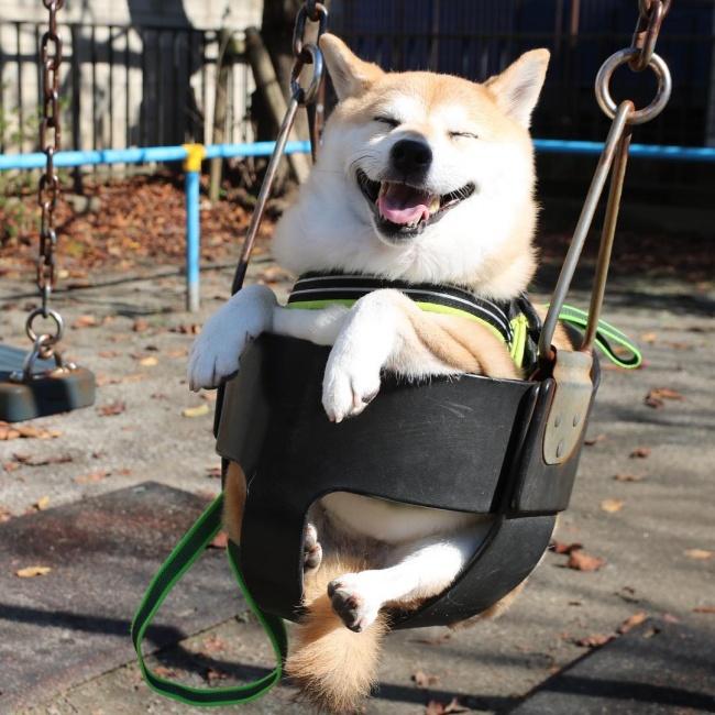 20 крутейших фотографий, которыми собаки могут гордиться (20 фото)