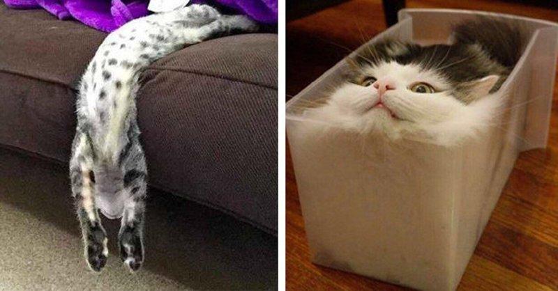 22 доказательства того, что кот - это жидкость (23фото)