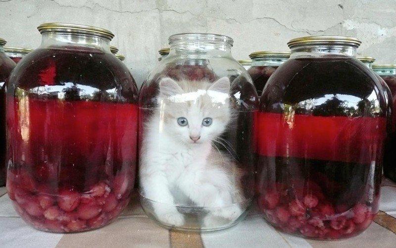 22 доказательства того, что кот — это жидкость (22фото)