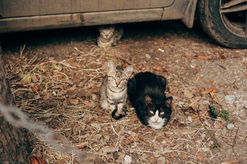 Очень колоритные уличные коты (29фото)