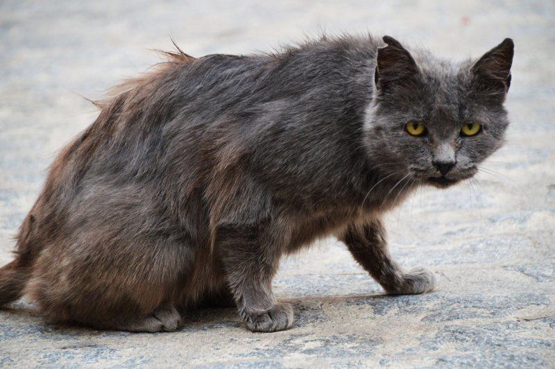 Очень колоритные уличные коты (30фото)