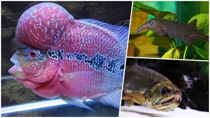 Самые странные и необычные аквариумные рыбы (21фото)