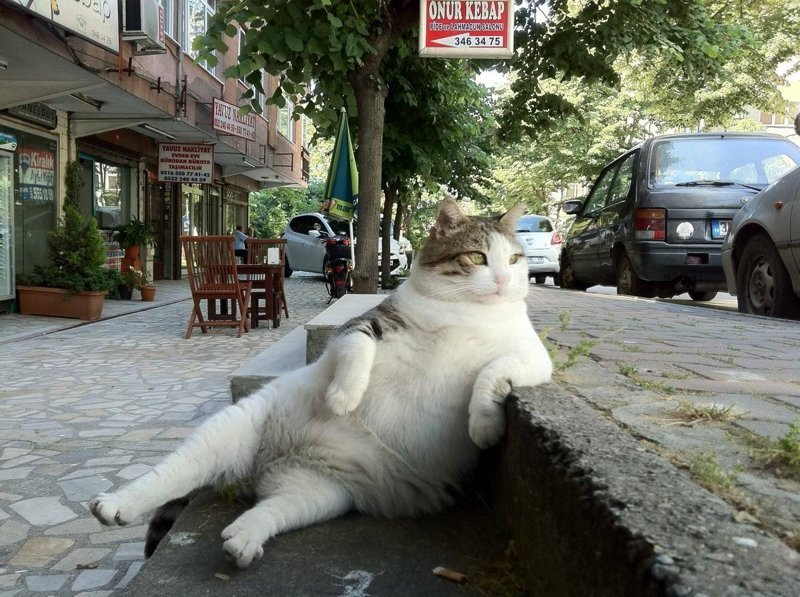 15 правил жизни настоящего кота (15фото)