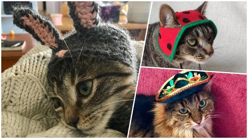 25+ очаровательных котиков в шапках для поднятия настроения (29фото)
