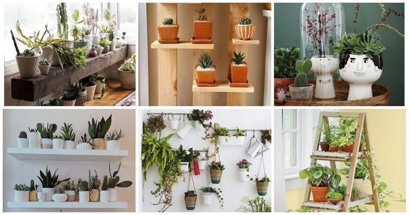 Интересные способы озеленить квартиру (27фото)