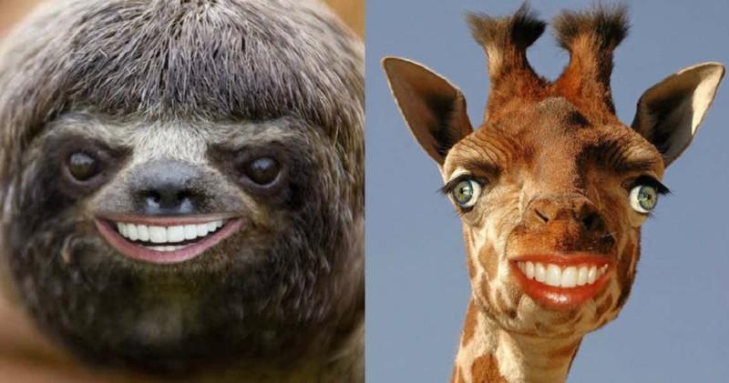 Что фотошоперы натворили с этими несчастными животными? (16фото)