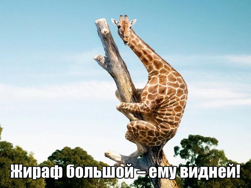 Цитаты из песен Владимира Семёновича, ушедшие в народ, теперь в самодельных картинках (19фото)