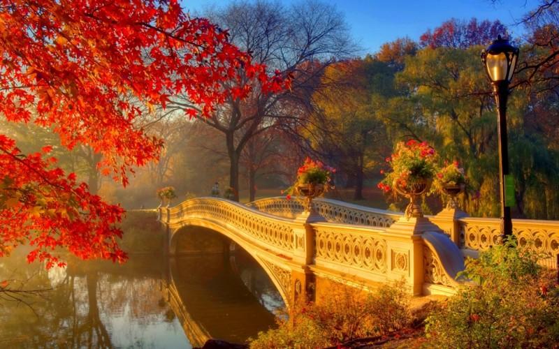 Яркие краски осени (14фото+1видео)