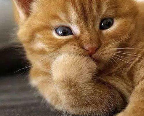 Кошки, которые задумались о чем-то важном (13фото)