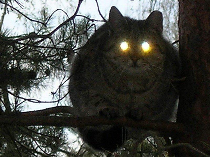Свет фар кошачьих (25фото)