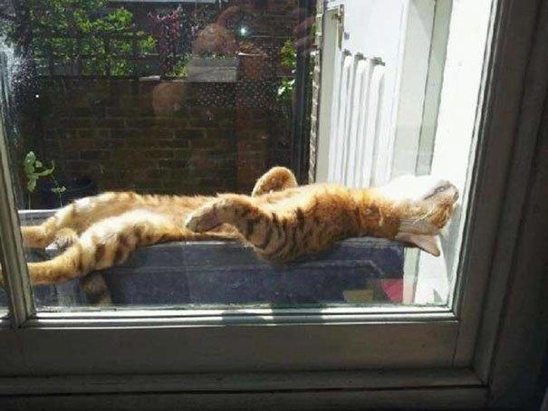 Кошки, которые ждут тепла больше, чем кто-либо (22фото)