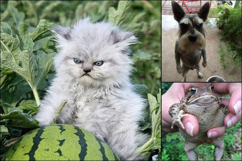 Злобные милахи. 16 крошечных, милых и очень злых зверюшек (17фото)