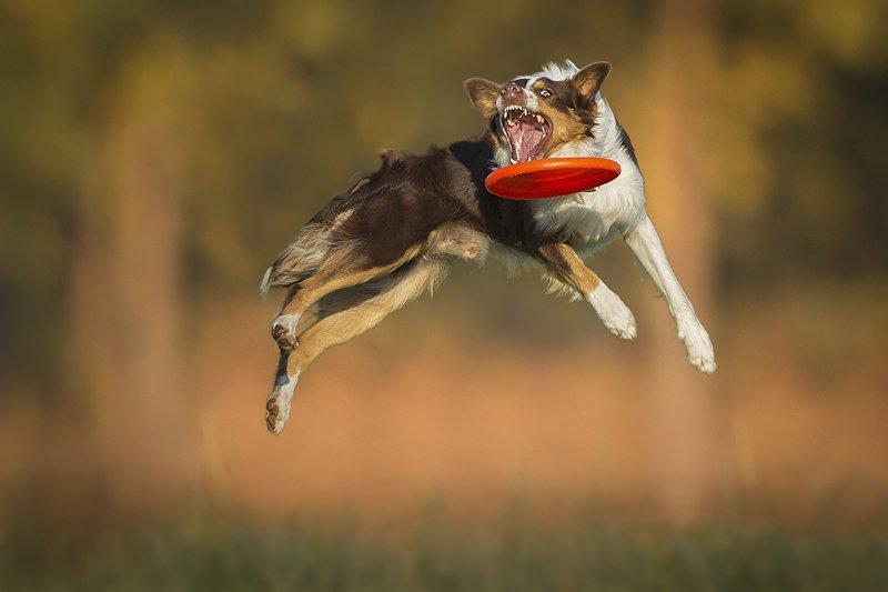 Пёс - птица гордая - просто так не полетит! (23фото)