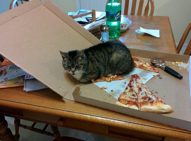 Странная кошачья логика, которую человеку никогда не постичь (28фото)