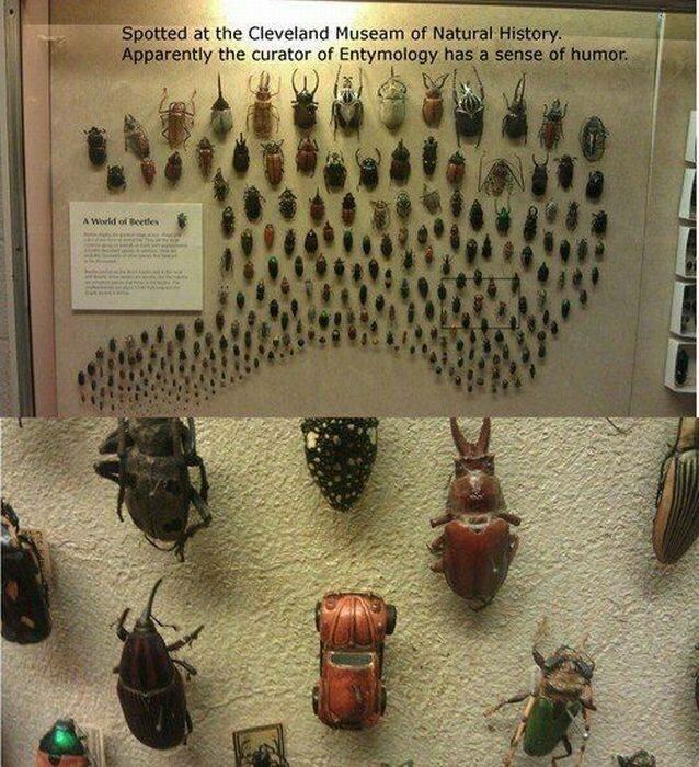 Пестрый мир насекомых (24фото)