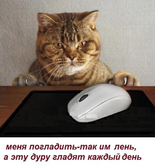 Картинки с надписями про котов (53фото)
