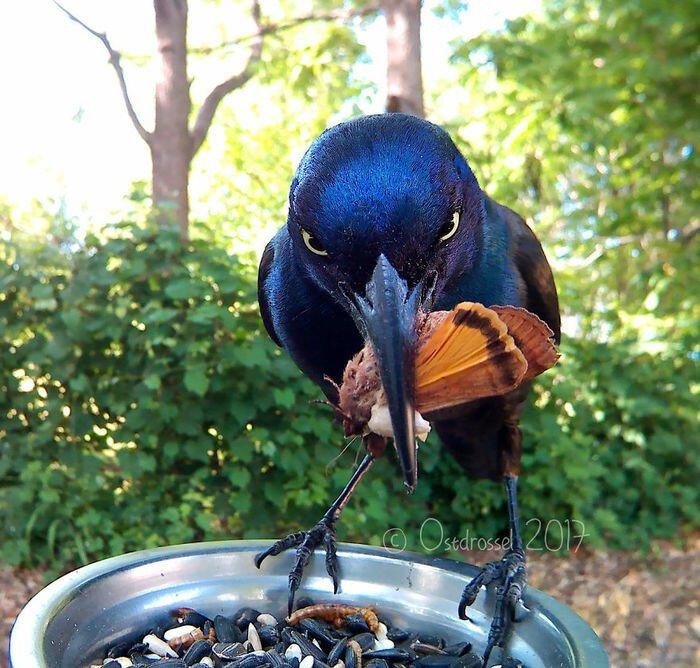Фотоловушка для птиц (11фото)