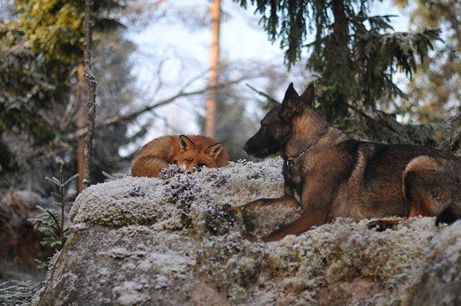 Зверские фото. Трогательная дружба между животными (36фото)