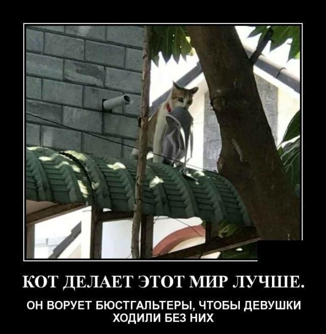 Образ кошки в демотиваторах (18фото)