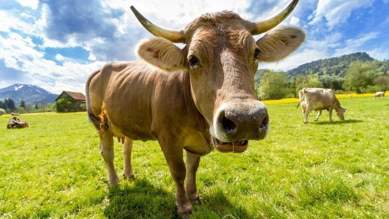 10 интересных фактов о животных (11фото)