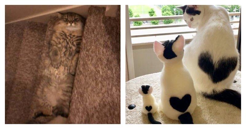 Для чего нужен интернет? Чтобы делиться фотками котиков! (50фото)