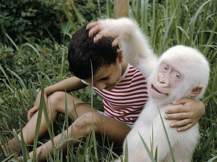 Капризы природы: животные-альбиносы (21фото)